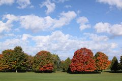 Bright fall colors. Bright trees against a clear blue sky with puffy white clouds Stock Photos