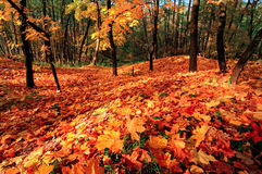 Bright fall Royalty Free Stock Image