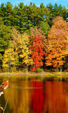 Bright fall foilage reflected in a lake Royalty Free Stock Photos
