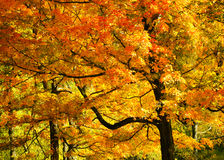 Bright Fall Foliage Stock Photo