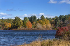 Bright fall foliage along shoreline of lake, Mansfield Hollow, C Royalty Free Stock Images