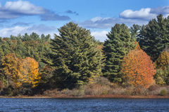 Bright fall foliage along shoreline of lake, Mansfield Hollow, C Royalty Free Stock Photo