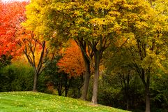 Bright fall foliage in Michigan. Some bright fall foliage in various bright colors in suburban Michigan, USA stock images