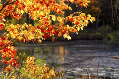 Bright fall foliage at Quincy Bog, New Hampshire. Bright fall foliage along shore of open waters of Quincy Bog in Plymouth, New Hampshire Stock Photography