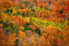 Bright fall foliage in Vermont mountains stock image
