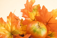 Bright Fall Leaves and Tomato Stock Photo