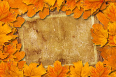 Bright fallen autumn leaves Stock Images