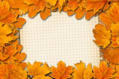 Bright fallen autumn leaves Stock Image