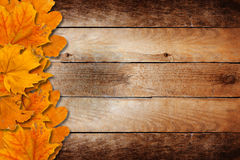 Bright fallen autumn leaves Royalty Free Stock Image