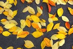 Bright fallen foliage. On asphalt background Royalty Free Stock Photography