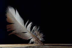 Bright feather, fine patternd on black background, copy space Royalty Free Stock Photography