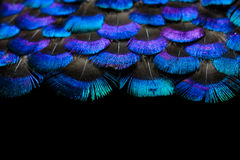 Bright feathers background Stock Photography