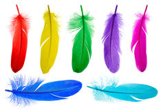 Bright feathers background. Set of fluffy feathers isolated on white Stock Images