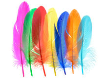 Bright feathers background Royalty Free Stock Photo