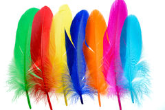 Bright feathers background Royalty Free Stock Photography