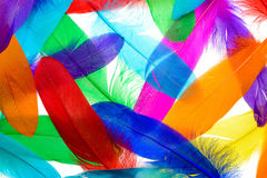 Bright feathers background Stock Photo