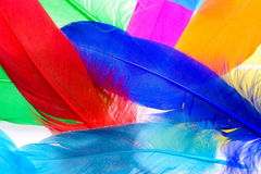 Bright feathers background Stock Image