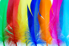 Bright feathers background Royalty Free Stock Images