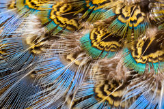 Bright feathers background Royalty Free Stock Image