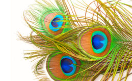 Bright feathers of a peacock. Close up Stock Images