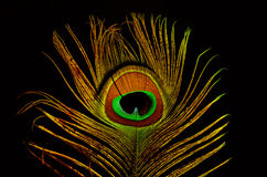Bright feathers of a peacock close up. On a black background Royalty Free Stock Image