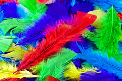 Bright feathers. Background of bright colorful feathers Royalty Free Stock Images