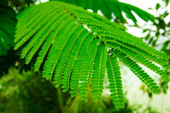 Bright  fern leaves. Bright  juicy green fern leaves Stock Image