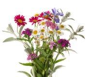 Bright Field bouquet Stock Photos