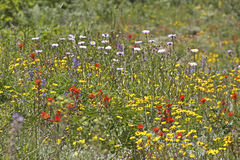 Bright Field of Colorful Summer Wildflowers Stock Photos