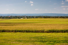 Bright Fields on a Sunny Day Royalty Free Stock Photos