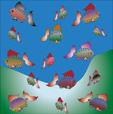 Bright fish Royalty Free Stock Images