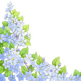 Bright floral background Stock Photography