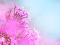 Bright floral background Stock Image