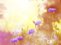 Bright floral background. Bright sunny blurred floral background Stock Image