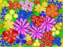 Beautiful multicolored flowers. Royalty Free Stock Photo