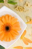 Bright flower. In a bowl with water Royalty Free Stock Photography
