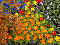 Bright  flower beds, landscaping. Bright city flower beds, landscaping in parks and on the streets of Sochi resort Royalty Free Stock Image