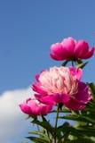 Bright flower Stock Photo