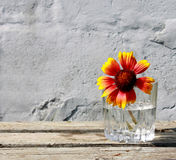 Bright flower on a gray background Stock Photos