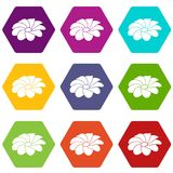 Bright flower icons set 9 vector. Bright flower icons 9 set coloful isolated on white for web Stock Photo
