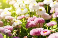 Bright Flower Stock Image