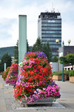 Bright flower pyramide as street decoration, high administrative building in background Stock Photography