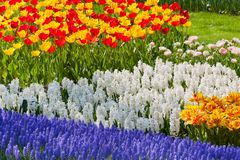 Bright flowerbed Stock Image
