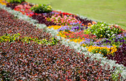 Bright flowerbed Royalty Free Stock Image