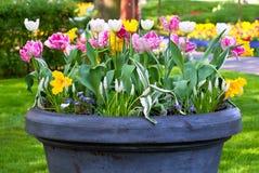 Bright flowerbed in Keukenhof Stock Photo