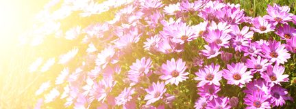 bright flowerbed royalty free stock photography