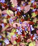 Bright flowering shrubs in autumn park. stock photo