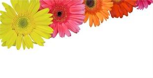 Bright flowers stock image