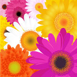 Bright Flowers Stock Images