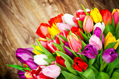 Bright flowers Royalty Free Stock Image